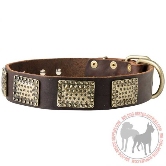 Designer Leather Dog Collar with Hammered Vintage BRASS Plates