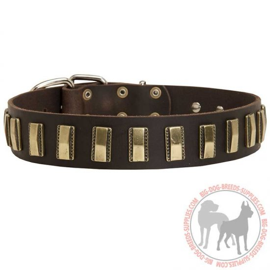 Designer Leather Dog Collar with Amazing Brass Plates