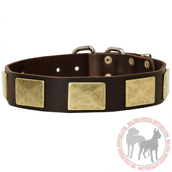 Fashion Leather Dog Collar with Large Brass Plates for Walking and Training