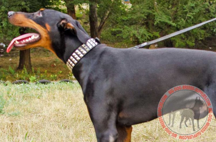 Walking in Style Leather Doberman Collar with Pyramids