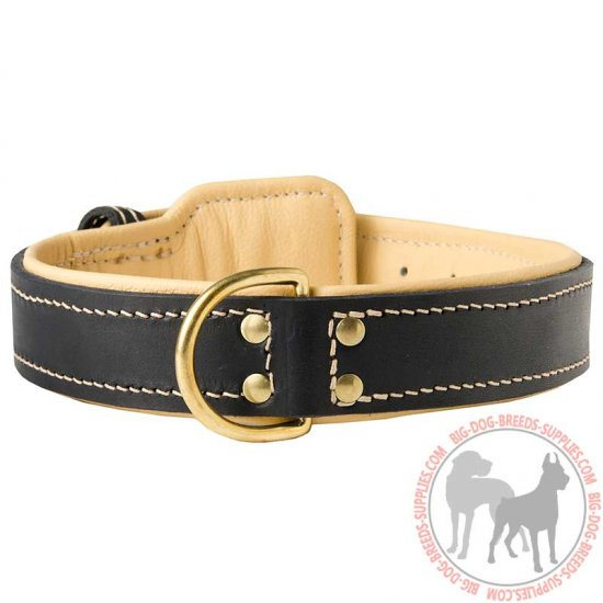 Nappa Padded Leather Dog Collar for Walking and Training