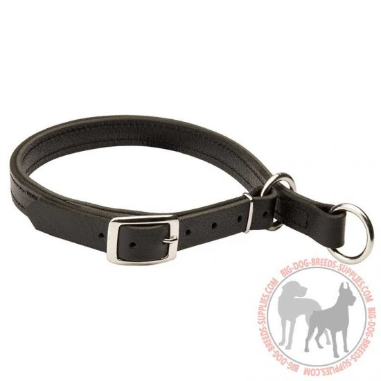 Training Leather Slip Dog Collar with Nicklel Hardware