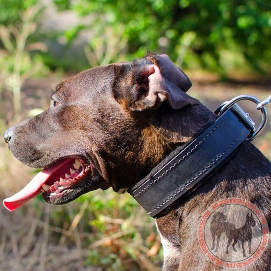 Felt Padded Leather Pitbull Collar for Attack Training