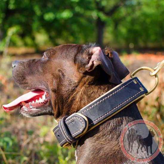 Nice Leather Pitbull Collar Padded with Nappa Leather