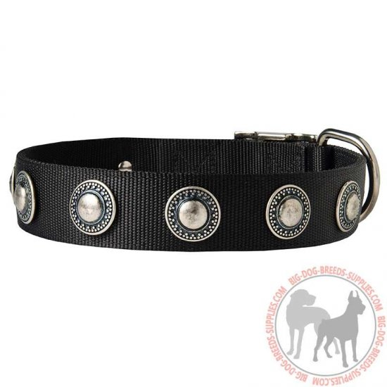 Conchos Decorated Wide Nylon Dog Collar for Walking
