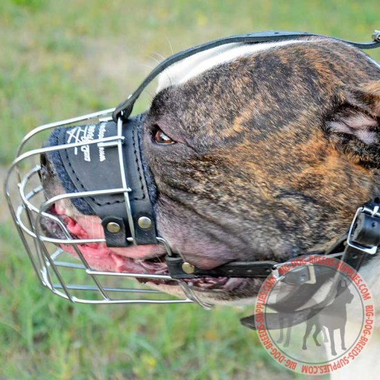 Wire Cage American Bulldog Muzzle for Walking and Training