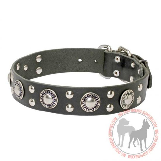 'Rock n Roll' Leather Dog Collar with Stud Decorations