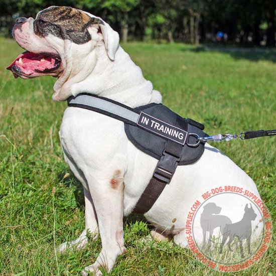 Lightweight Nylon American Bulldog Harness for Pulling, Tracking, Training and Walking