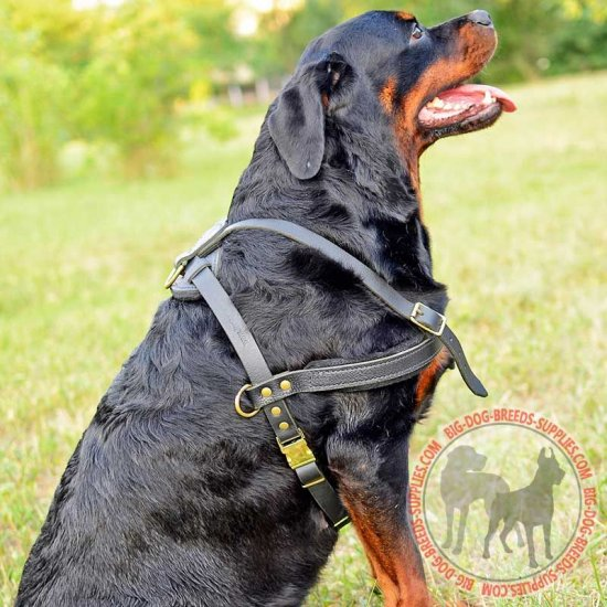 Well-Built Leather Rottweiler Harness for Pulling and Tracking Work