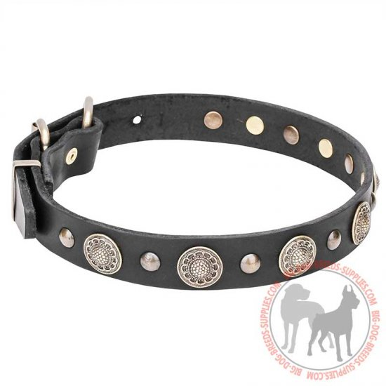 """Magic Necklace"" Amazing Leather Dog Collar with Brass Circles and Studs"