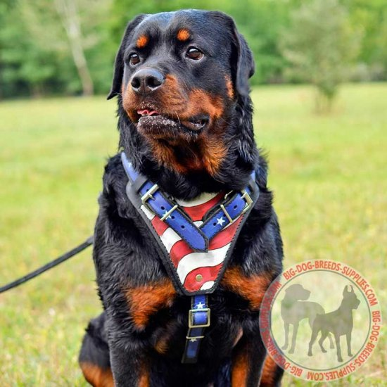 Handpainted Leather Rottweiler Harness for Attack Training
