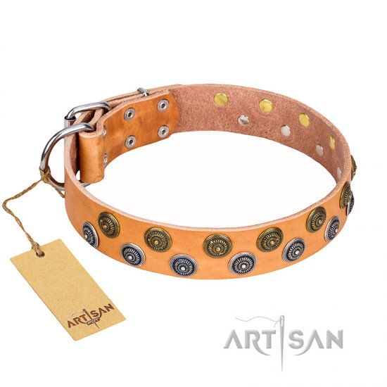 """Precious Sparkle"" Wide FDT Artisan Leather Dog Collar with Goldish and Silvery Studs"