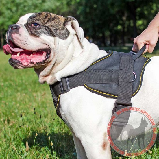 Nylon American Bulldog Harness for Pulling / Tracking / Training / Walking