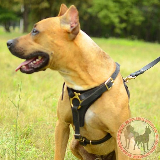 Tracking / Training Leather Pitbull Harness with Small Chest Plate
