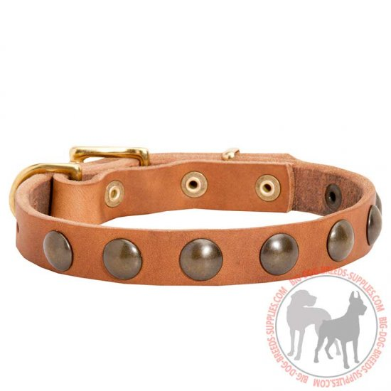 Walking and Training Studded Puppy Leather Dog Collar