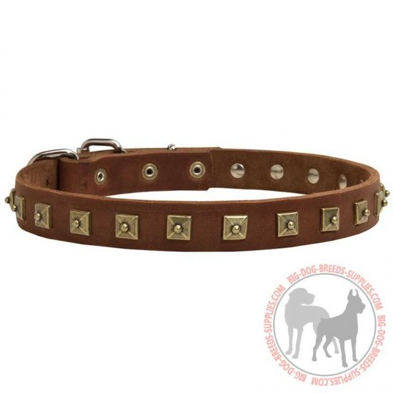 Brass Studded Leather Canine Collar for Walking
