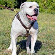 Leather American Bulldog Harness for Tracking Work