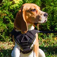 Multifunctional Nylon Small Dog Breeds Harness for Tracking / Pulling / SAR / Training