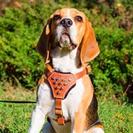 Leather Dog Harness Decorated with Pyramids for Puppies and Small Breeds Daily Walking and Training