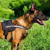 Belgian Malinois Nylon Harness for K9 Service