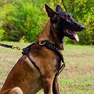 Belgian Malinois Harness For Stylish Walking And Training