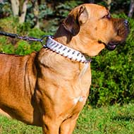 Pink Leather Cane Corso Collar with Spikes