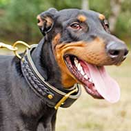 2 ply Leather Doberman Collar with Braids