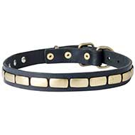 Walking and Training Brass Plated Leather Dog Collar