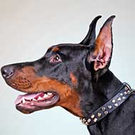 Studded Leather Doberman Collar for Walking in Style
