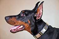 Fashionable Spiked and Plated Leather Doberman Collar for Daily Walks