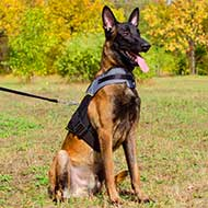 Nylon Vest-like Belgian Malinois Harness For Rehabilitation