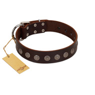 """Starry-Eyed"" Best Quality FDT Artisan Brown Designer Leather dog Collar with Small Plates"
