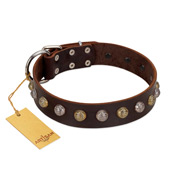 """Gape Buster"" FDT Artisan Brown Leather dog Collar with One Row of Studs"
