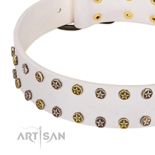 Remarkable adornments on full grain leather collar for your four-legged friend