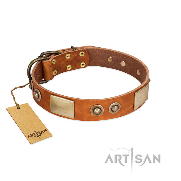 Easy wearing full grain leather dog collar for everyday walking your four-legged friend