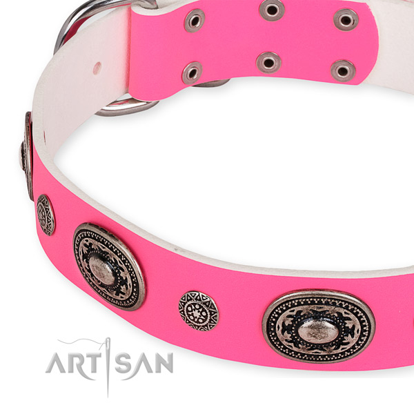 Full grain genuine leather dog collar with unusual corrosion proof studs