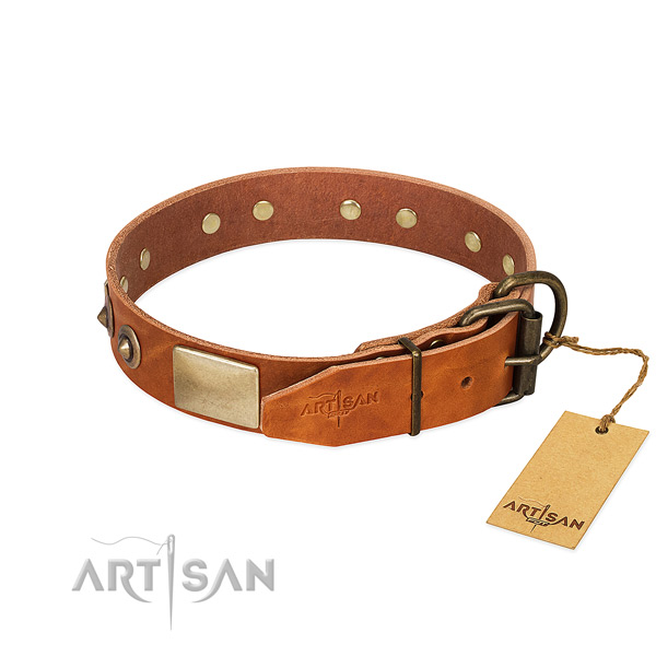 Durable adornments on everyday walking dog collar
