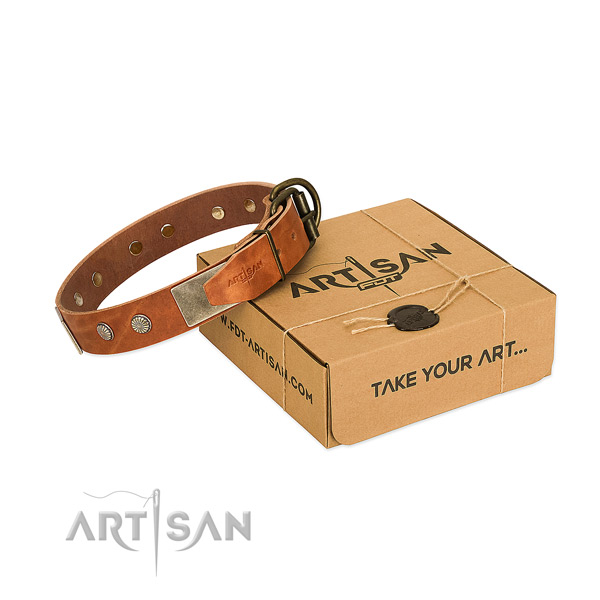 Corrosion proof traditional buckle on dog collar for basic training