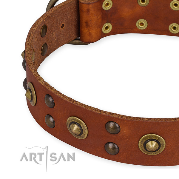 Full grain leather collar with strong fittings for your handsome dog