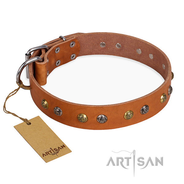 Stylish walking amazing dog collar with reliable traditional buckle