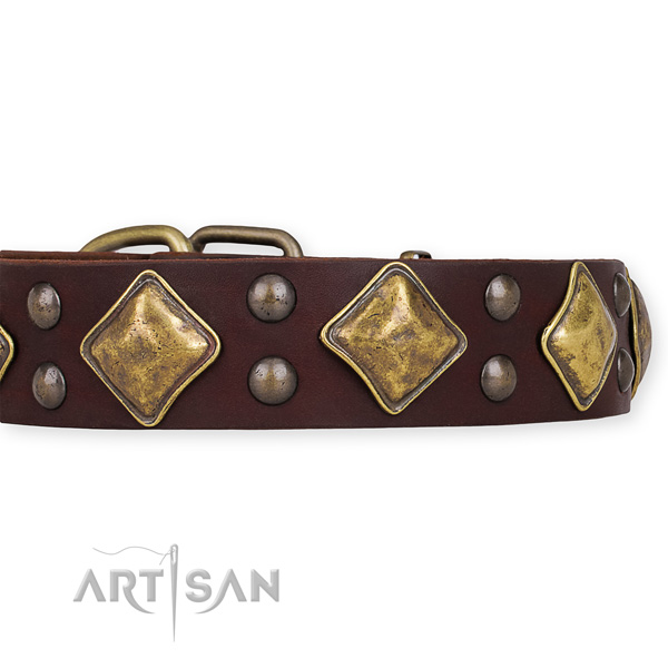 Natural leather dog collar with extraordinary reliable adornments