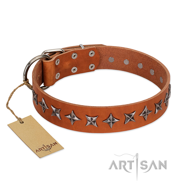 Everyday walking dog collar of quality full grain leather with studs