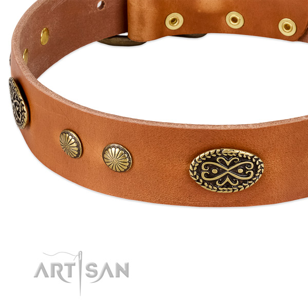 Rust-proof studs on Genuine leather dog collar for your dog