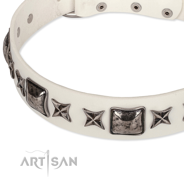 Fancy walking studded dog collar of top notch full grain leather