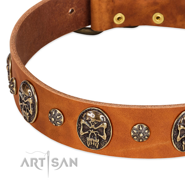 Rust-proof studs on genuine leather dog collar for your pet