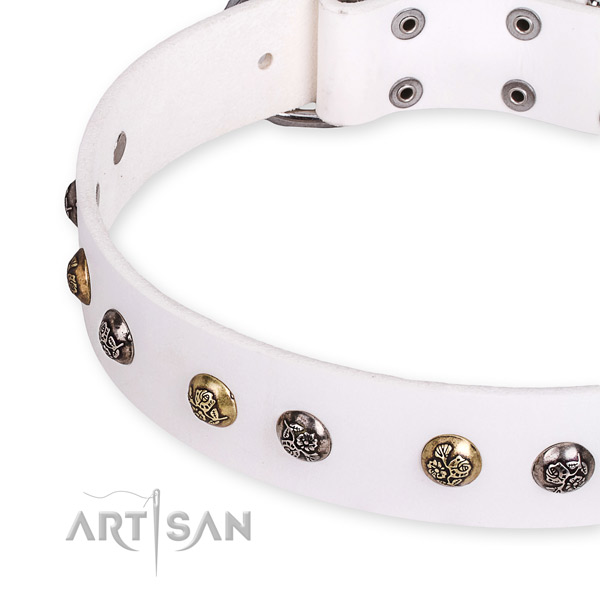 Full grain leather dog collar with impressive durable studs