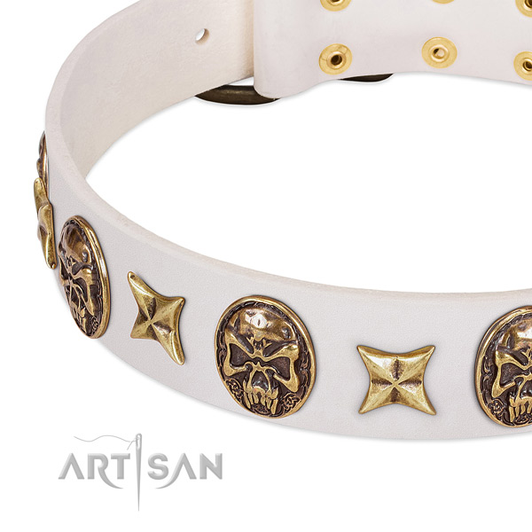 Studded dog collar made for your impressive doggie