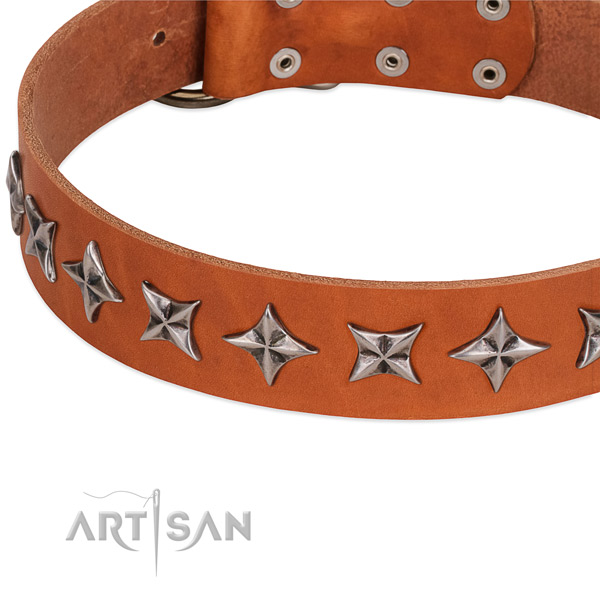 Everyday use adorned dog collar of high quality leather