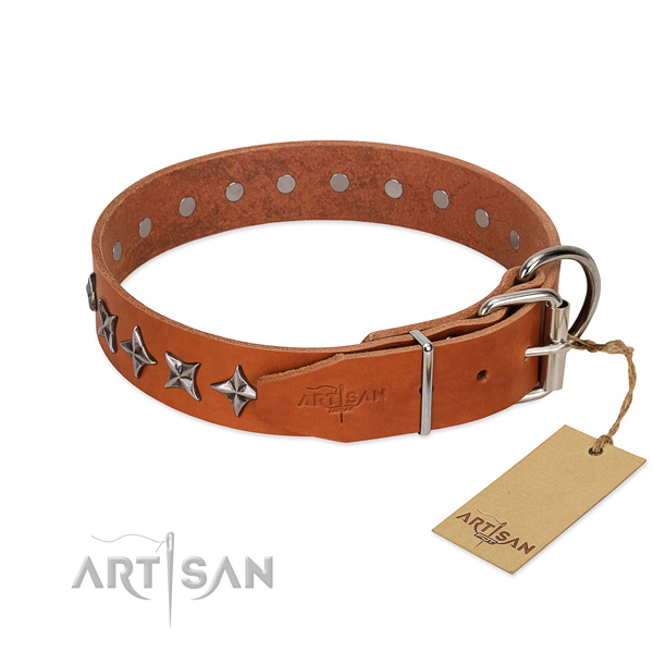 Everyday walking studded dog collar of high quality leather