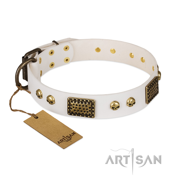 Rust resistant adornments on everyday walking dog collar